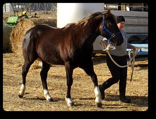 Quincy at 3 yrs old (Mar 2021) Black Silver EEaaZZ