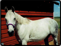The same horse at 8 yrs old